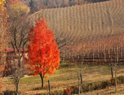 Piedmont: a perfect place for food and wine