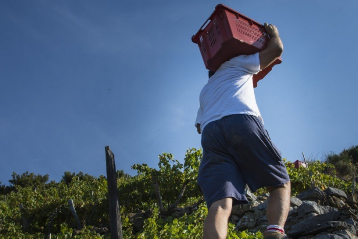4 Sustainable Food & Wine Tours in Italy Your Eco-friendly Tour Operator